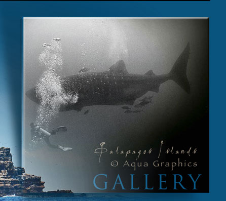 • Aqua Graphics Marine Conservation Photography.. Underwater Photo Web Design Services.